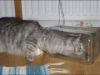 bottlecat1